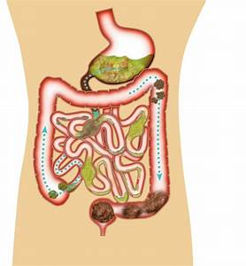 Quiz Yourself On Digestion  Quiz