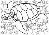 Turtles Colouring Starfish Seaside Printables sketch template