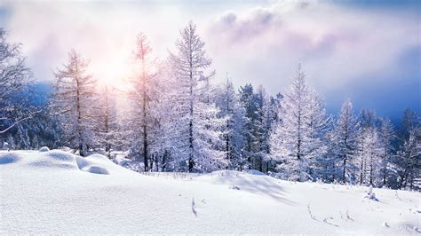 Wallpaper forest, snow, winter, clouds, 8k, Nature #17356