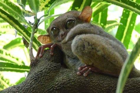 Rainforest Animals List With Pictures Facts & Links to