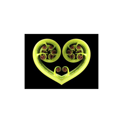 Koru Heart - Wayfarer Images