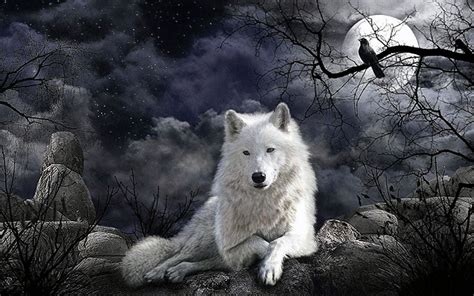 wallpapers wolf mond wolf wallpaperspro