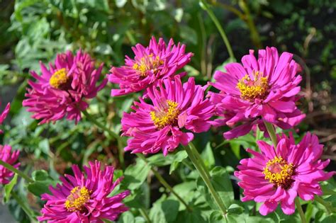 Flower Image Floriculture Services Care For Your Arizona Desert