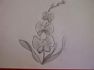 Bilder Zeichnen Für Anfänger : zeichnen lernen blume zeichnen tulpe zeichnen lernen ~ Frokenaadalensverden.com Haus und Dekorationen
