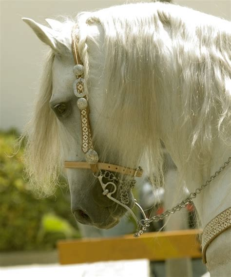 Beautiful Carousel Grey Horse