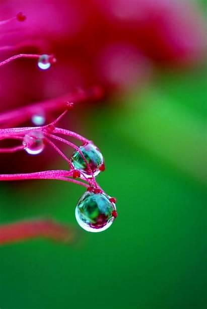 Drops Water Drop Rain Dew Amazing Droplets