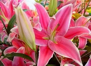 wallpapers free beautiful flowers wallpaper
