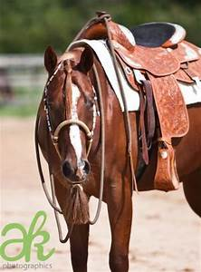 Barrel racing, Tack and Paint horses on Pinterest