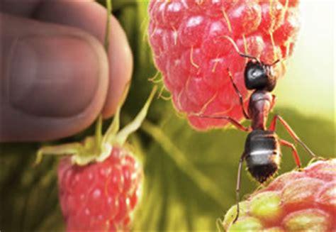 ameisenbekaempfung biologische mittel fuer haus und rasen