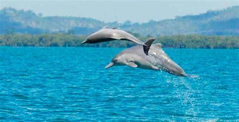 el delfin jorobado conquista  su pareja  regalos