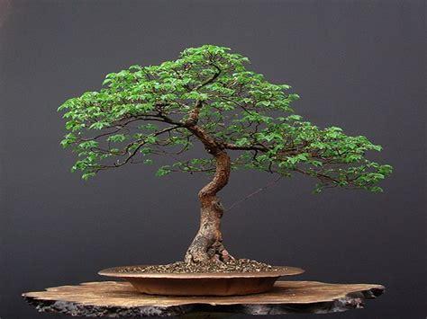 Mini Bäume Winterhart by ผลการค นหาร ปภาพสำหร บ Evenementen Arboretum Kalmthout