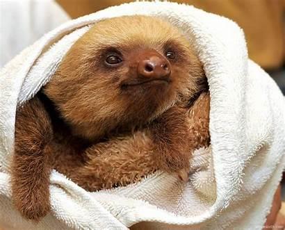 Sloth Sloths Cute Sanctuary Sharesloth Rica Costa