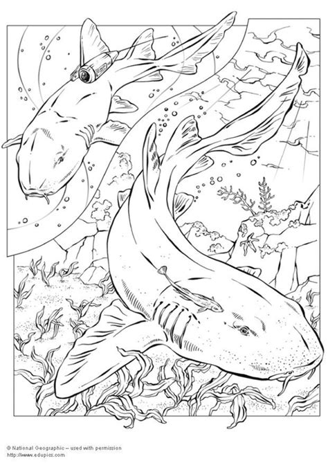 Witte Haai Kleurplaat by Kleurplaat Haaien Afb 5744