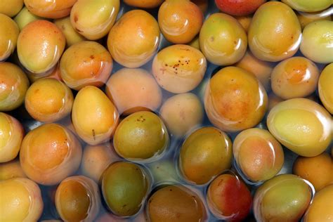 Lebanese Apricot Jam: What Makes It Special - Lebanon Traveler