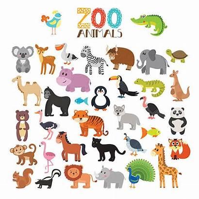 Zoo Animals Animal Cartoon Clipart Vektor Animali