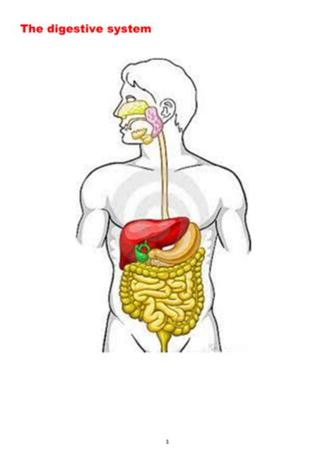 digestion powerpoint  booklet  digestive system