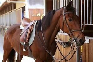 Horse Tack | Horse- Riding