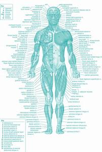 A Daily Dose Of Fit  Workout Wednesday  The Forgotten Muscles