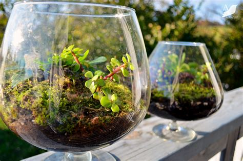 terrarium how to creative plant terrarium ideas gardening forums