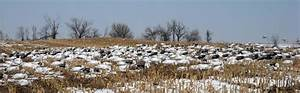 Decoys For Spring Snow Goose Hunting