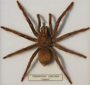 Faire Fuir Les Araignées : attention araign e ~ Melissatoandfro.com Idées de Décoration