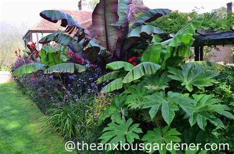 best hardy plants for borders ensete maurelii the anxious gardener