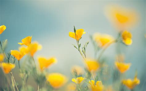 yellow flowers wallpapers images  pictures backgrounds