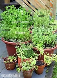 potted herb garden Grow Your Own Perennial Herb Container Garden - Garden Therapy