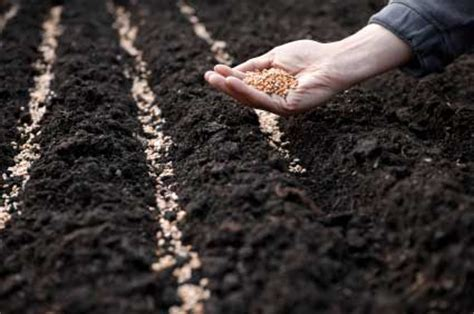 sowing seeds images 21 seeds of trust if you don t sow it you can t grow it leading with trust