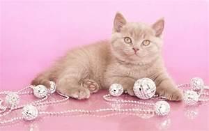 Hd, Cat, On, Pink, Wallpaper