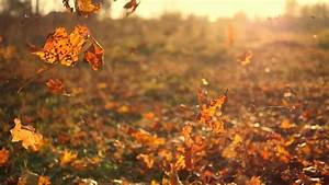 Fall, Leaves, Background, 43, Images