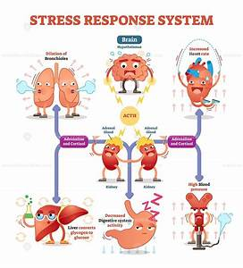 Stress Response System Diagram With Cartoon Characters