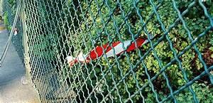 Bäume Schneiden Wann Erlaubt : wann hecke schneiden erlaubt bzw verboten hier stehts ~ A.2002-acura-tl-radio.info Haus und Dekorationen