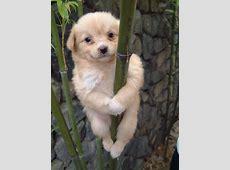 lustige hunde Hunde Blog
