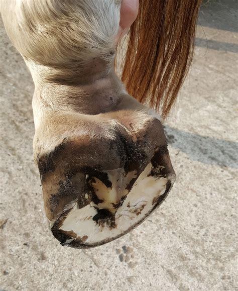 strahlfaeule beim pferd tipps zur vorbeugung und