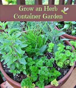 How to grow an herb container garden herbs gardens and for How to grow an herb garden