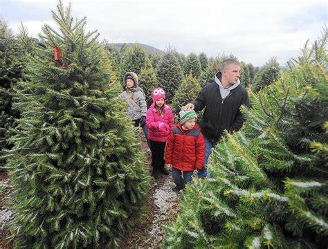tips  picking   christmas tree  morning call