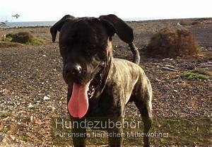 Hunde Sachen Kaufen : hundezubeh r tolle sachen f r jeden hund n tzliche sachen f r den hund ~ Watch28wear.com Haus und Dekorationen