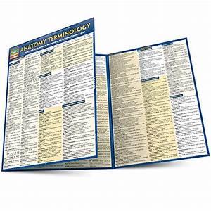 9781423216322  Anatomy Terminology  Quick Study Academic