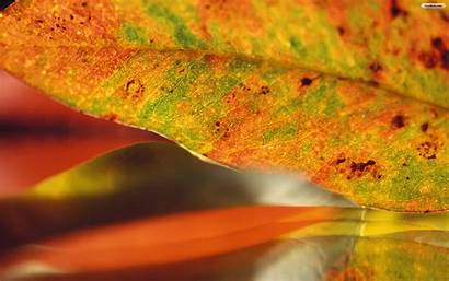 Leave Wallpapers Leaf Fall Vata Season Preparing