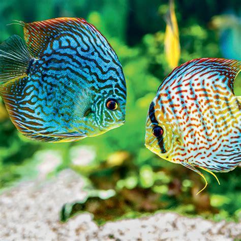 comment nourrir les poissons d aquarium maxi zoo