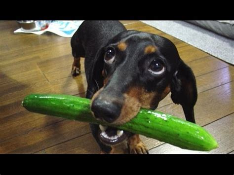 Funny Dogs That Will Make You Laugh