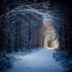 Enchanted Forest   Flickr - Photo Sharing!