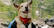 Rocky Mountain Spotted Fever (RMSF) in Dogs