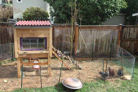 Raising Backyard Chickens For Dummies  Modern Farmer