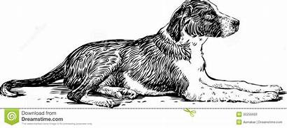 Dog Lying Drawing Stray Vector Hand Drawn