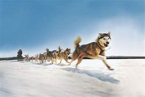 sleigh dogs | Dog Sled Team I just love this picture ...