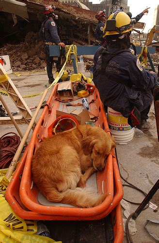 Fema  Sar Dogs Flickr P O Sharing