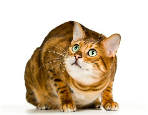5 Symptoms Of Stress In Cats