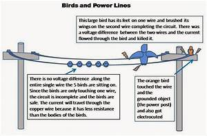 Electrical Engineering World  Why Birds Don U0026 39 T Get Electrocuted When They Sit On High Voltage